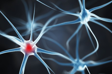 Neurons that fire together wire together